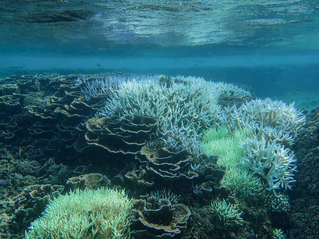 coral-sanctuary-in-sri-lanka