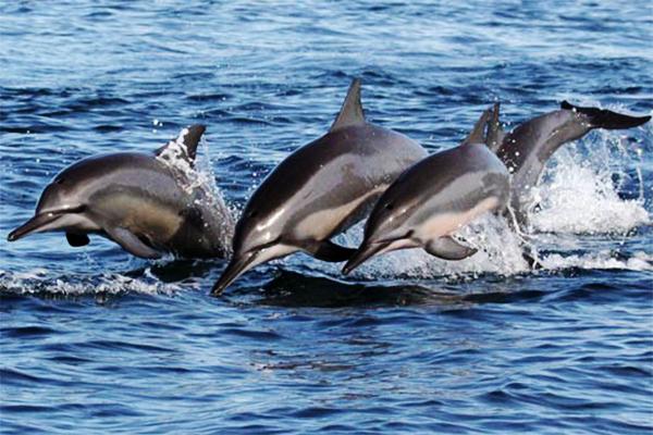 dolphin watching kalpitiya